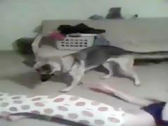 Milf bien follada con su mascota