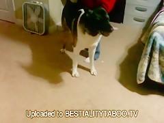 perro coje con un chico