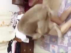 Mamándole la verga al perro con pasión