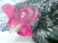 Rubia Sexy pone al Caballo a 100