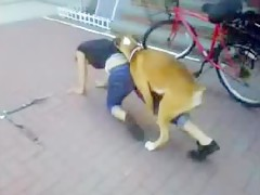 Esto es hechar un polvo rapido con el perro