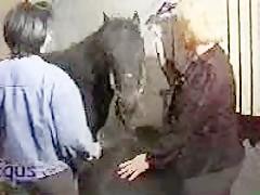 Casting de golfas con caballo