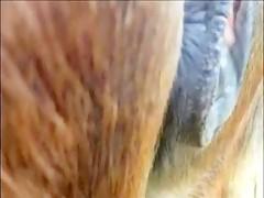 Zoofilia entre un hombre y su pony