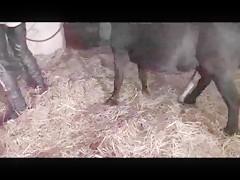 madurita cachonda follando con su caballo