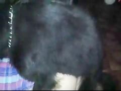 Madura tocandose hasta que se la hinca el perro