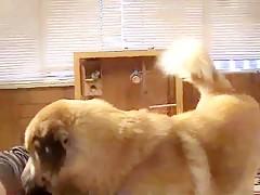 Hombre caliente se folla a su perra