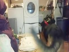 Metiendo la morcilla a su perrita 4