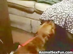 Asomando el Mollete para su Perro 2