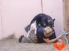 Metiendole el rabo del perro
