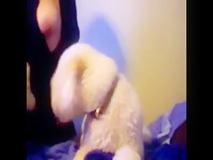 Entrenando a su mascota