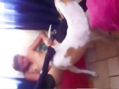 mejor perro que picha corta