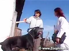 Zoofilia con perro chupador