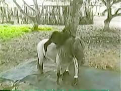Rubia caliente recibiendo a su perro