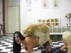 Dog sucked by horny girl