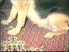 chupada canina