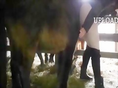 Amateur horse sex