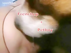 Petboy with frenchup